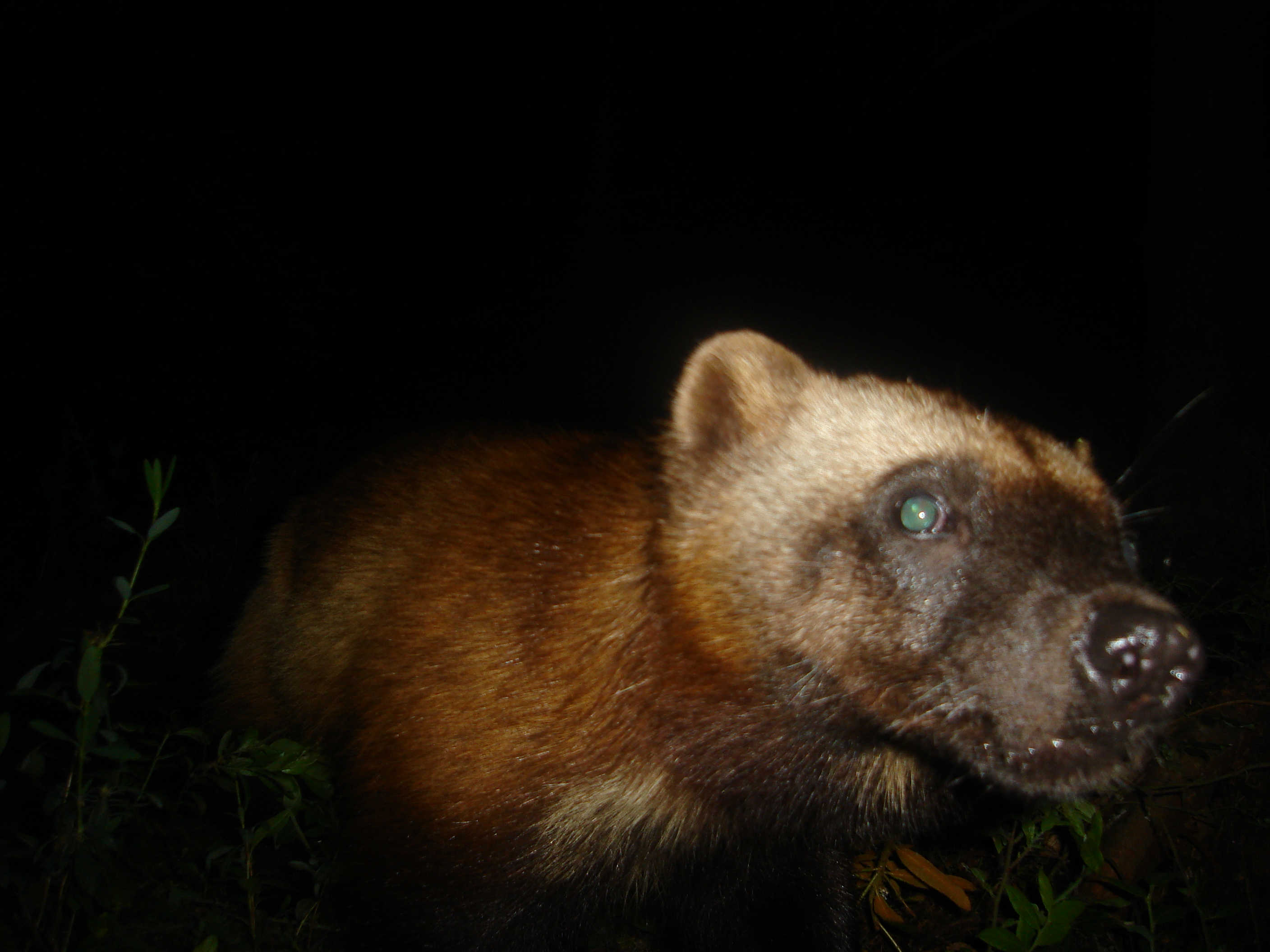 Image of: Friends The Amazon Uk Controversy Camera Traps And Unlikely Love In Michigan Review
