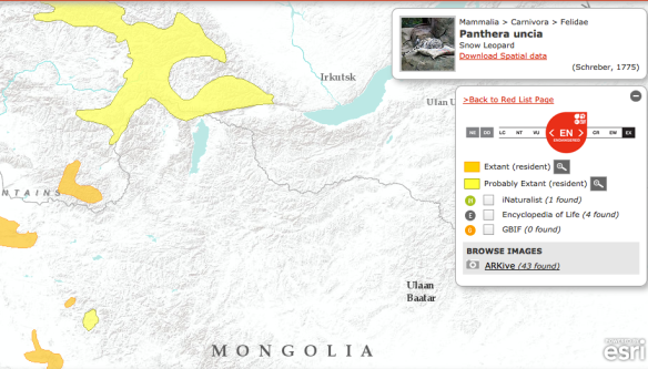 IUCN range map of snow leopards showing a probable resident population in northern Mongolia.